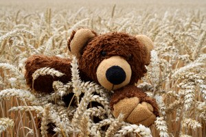 Ein Bär im Kornfeld